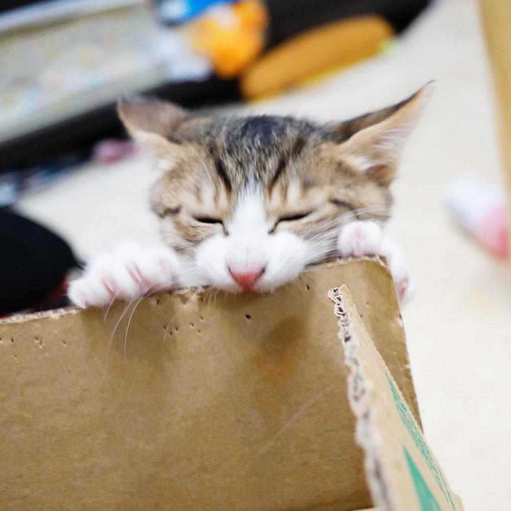子猫 成長記録 生後75日