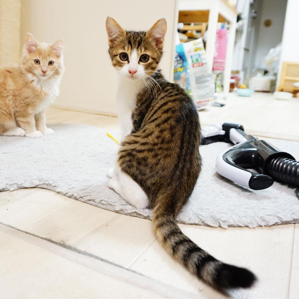 子猫 成長記録 生後91日
