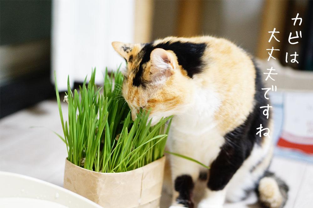 無印猫草 カビ問題