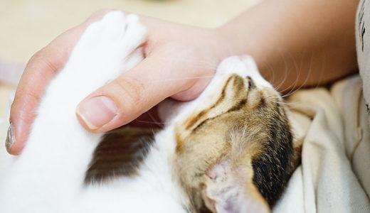 【体験談】猫の噛み癖を治すならしつけより〇〇が劇的に効果があった。