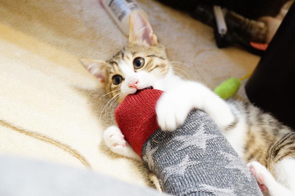 猫の噛み癖を治した方法