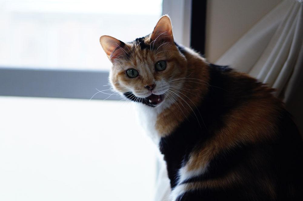 猫の噛み癖を治すしつけについて