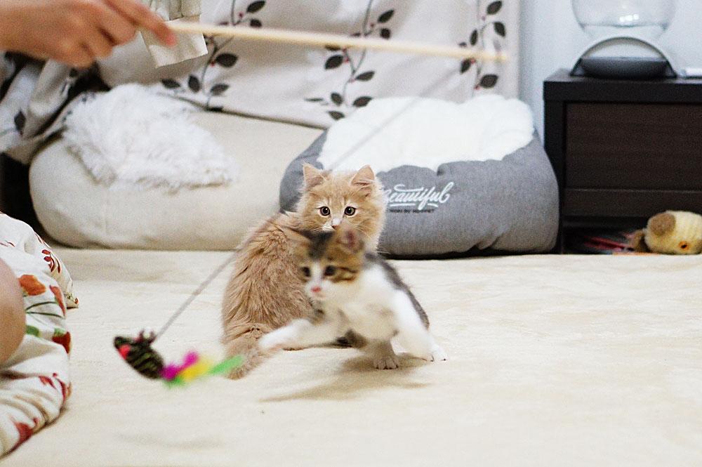 子猫の噛み癖はおもちゃで遊んで対策する