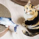 動画あり!動く魚のおもちゃ(ダンシングフィッシュ)をレビュー!猫の反応は?