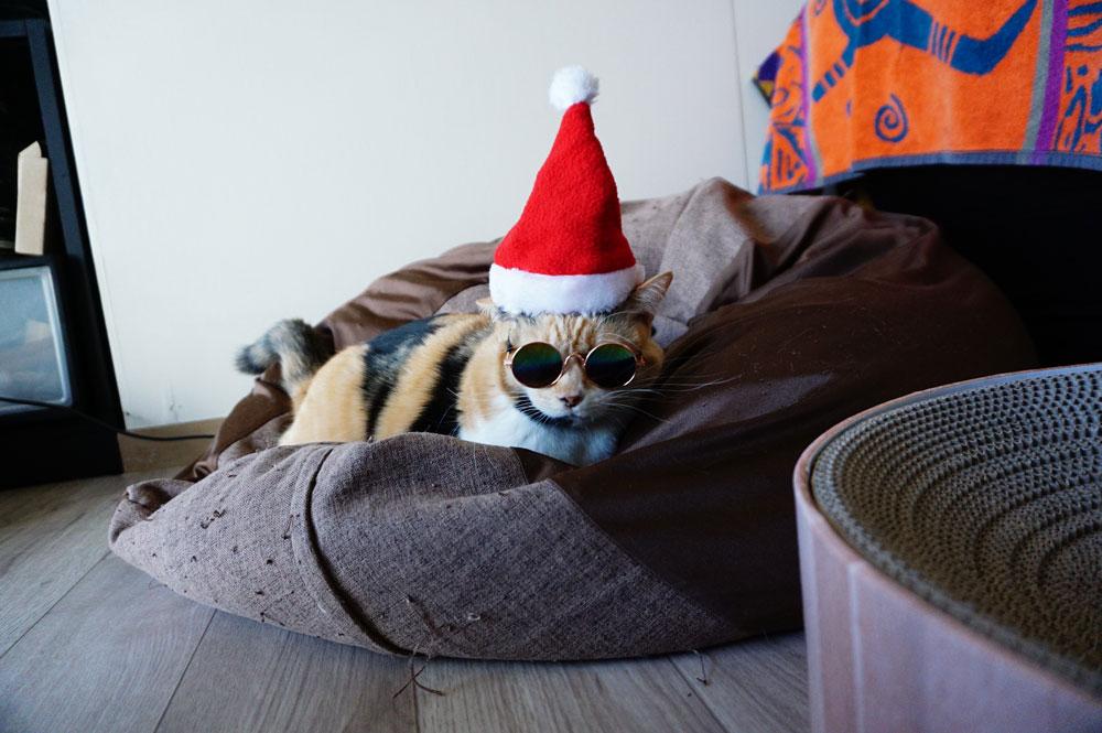 猫 コスプレ サンタ