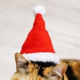 猫のクリスマス衣装(サンタ)を100均や通販で買ってみた。