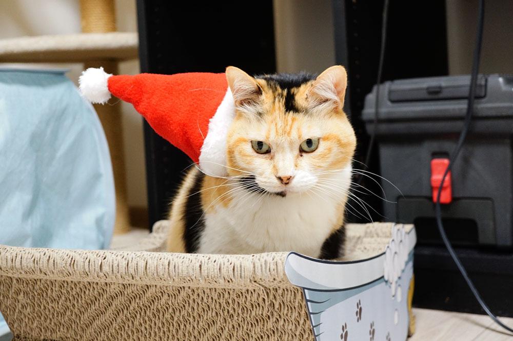 100均の猫用サンタ衣装