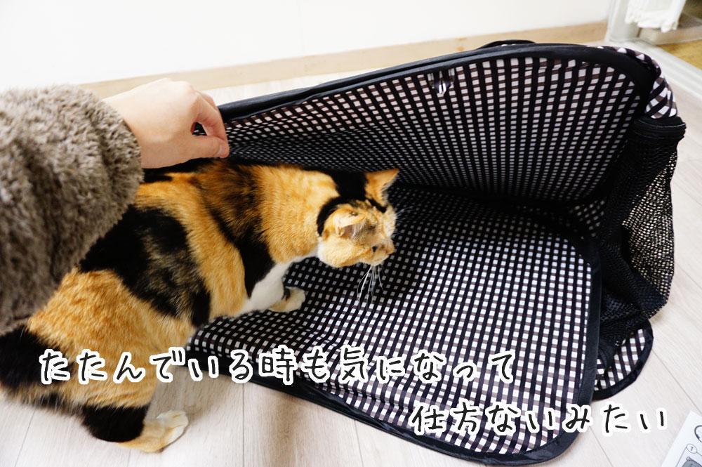 猫壱ポータブルケージをレビュー