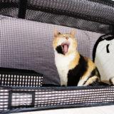 【レビュー】猫壱のポータブルケージ&トレイのセットを買ってみた!