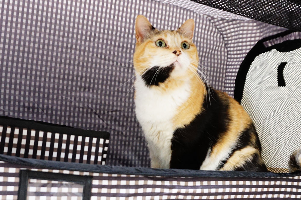 猫のために用意するポータブルケージの選び方
