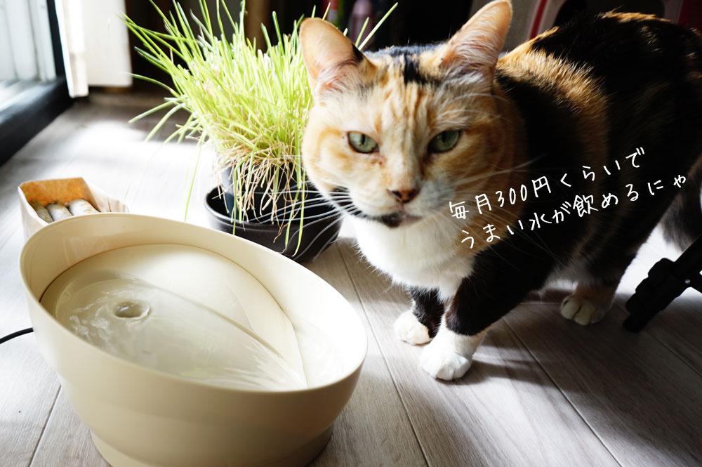 猫 ピュアクリスタル コパン 毎月のコスパ