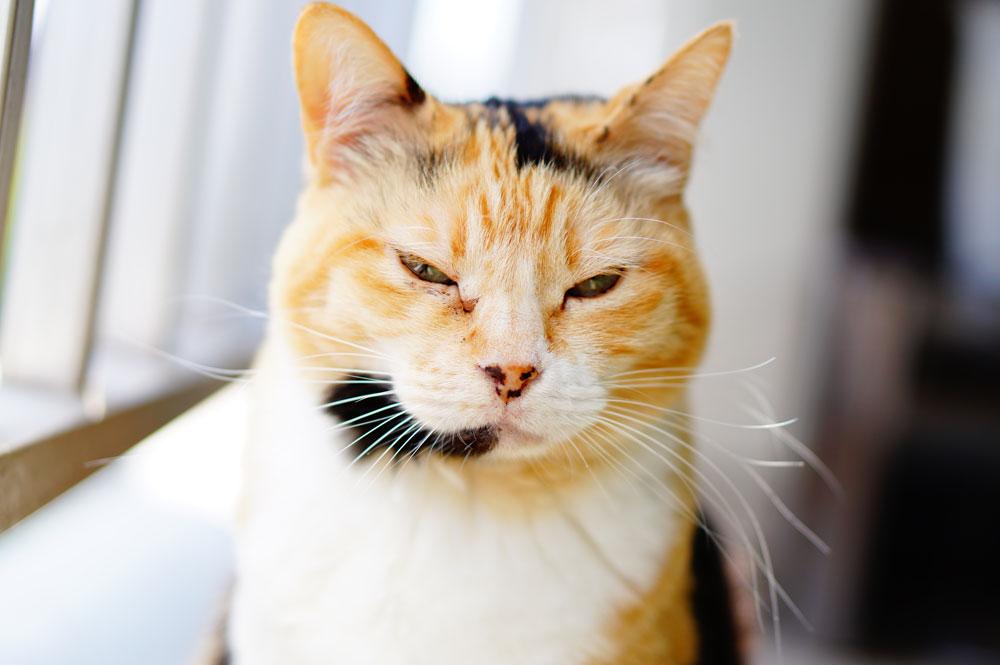 猫の茶色い目ヤニは毎日出ていても平気!