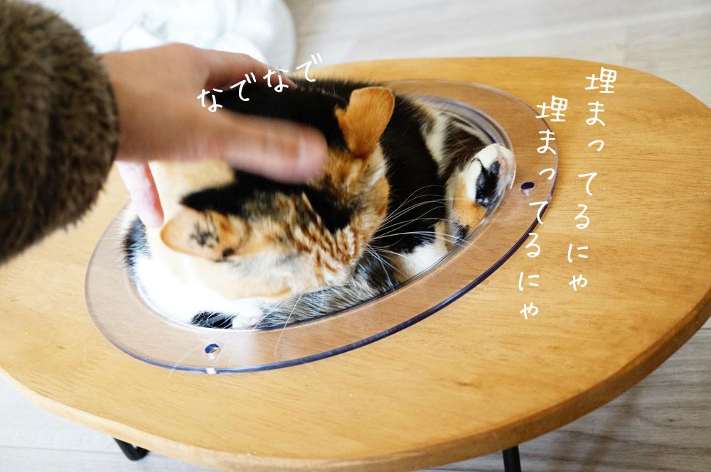 宇宙船クリアボウル猫ベッド