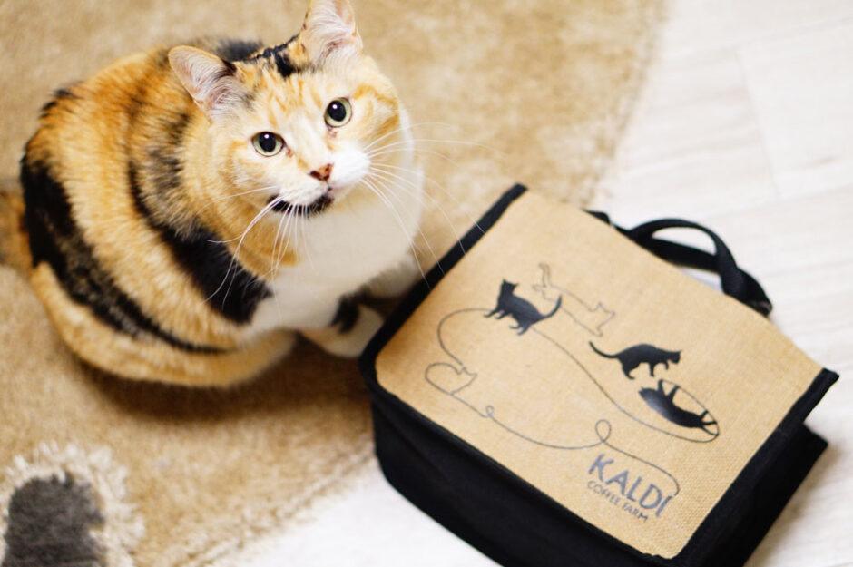 2021カルディ猫の日バッグを購入!並びや整理券の詳細・すぐ売り切れたのか?