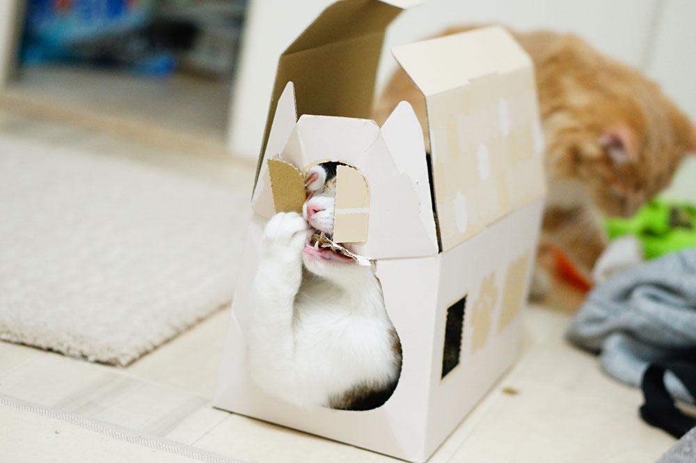 ねこねこハウスBOX