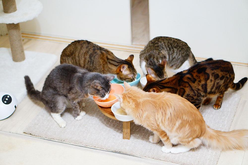 丹波鹿 猫 無添加スープ