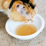 【天然材料で安心】猫ちゃん用の無添加スープを買ってみた!