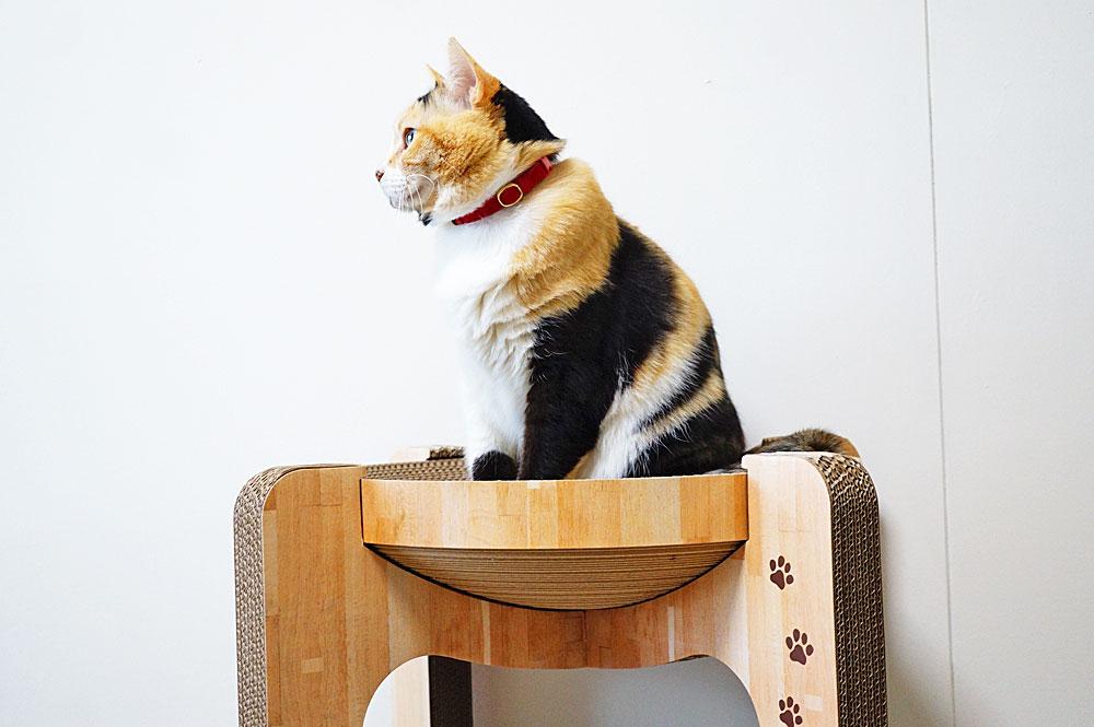 猫壱バリバリボウルタワーをレビュー