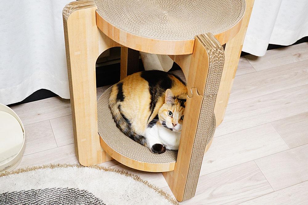 猫壱バリバリボウルタワーが好き