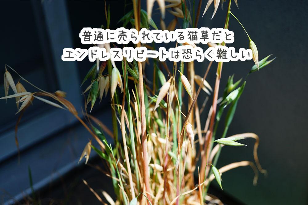 猫草を栽培して分かったこと