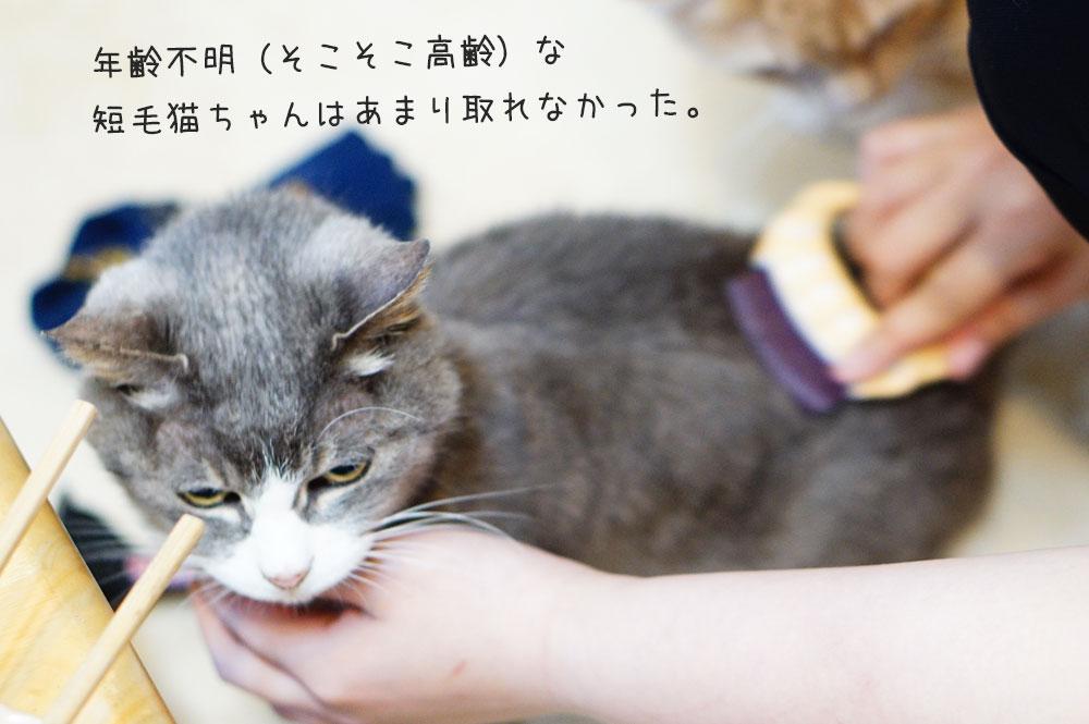 ピロコーム 短毛猫 高齢 感想