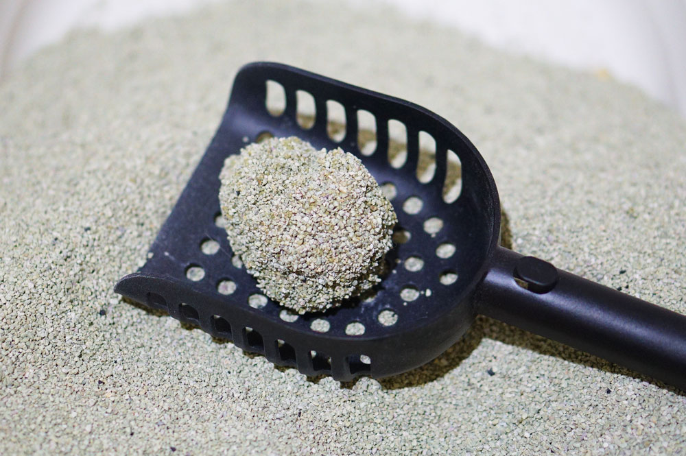 プレミアム猫砂「Sand100」をレビュー