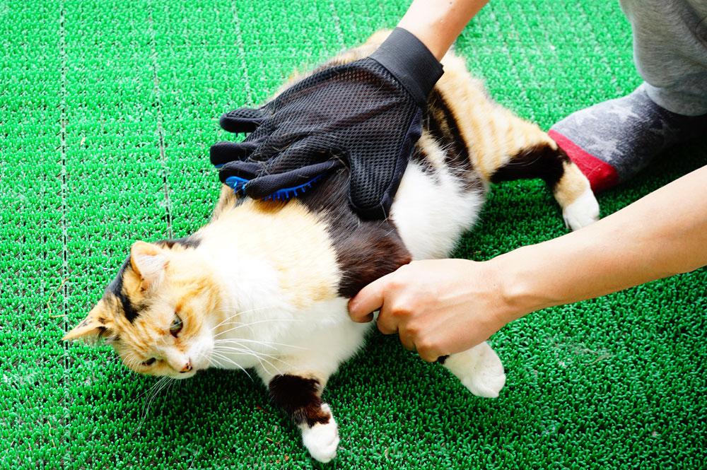 猫 ブラッシング手袋