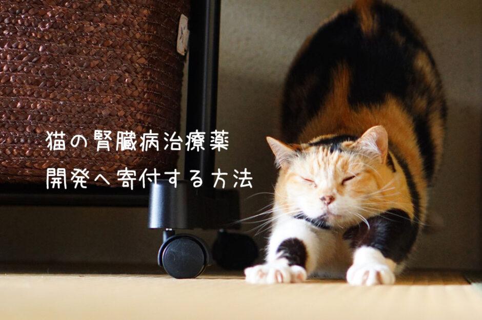 猫の「腎臓病(腎不全)治療薬」開発へ寄付する方法について