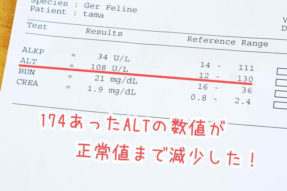 猫 肝臓の数値ALTが減少した