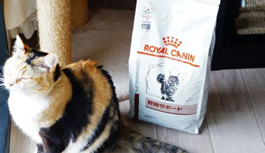 肝臓が悪い猫にロイヤルカナンの肝臓サポートを食べさせた結果!【口コミレポ】