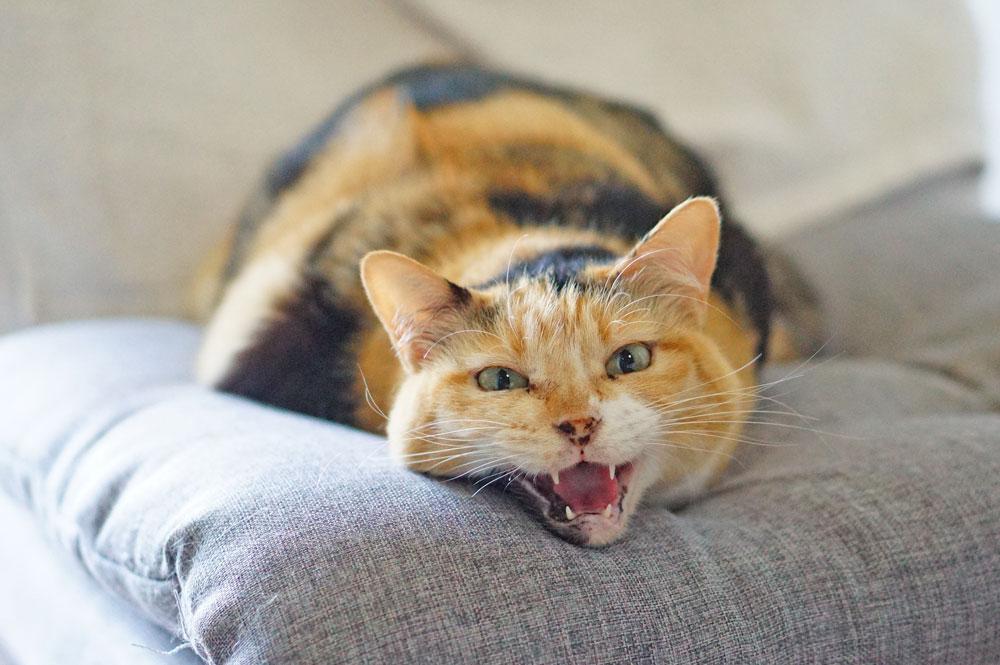 猫 ウルソ 効果 嘔吐