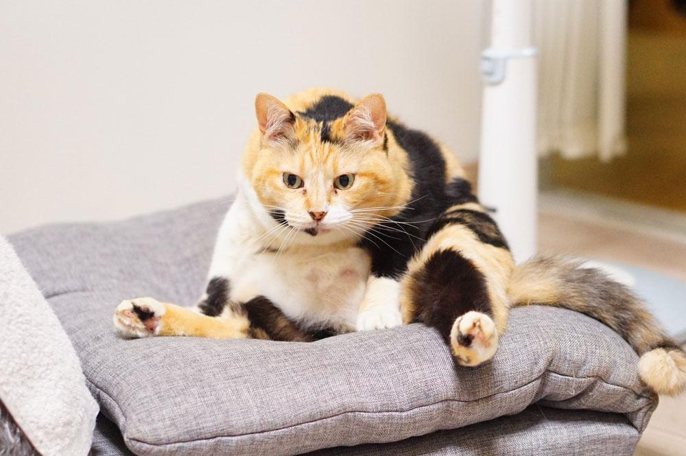 猫がいる家の「掃除機の選び方」