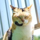 クーラーで適温なのに暑い場所に居たがる猫…何でなのか調べてみた!