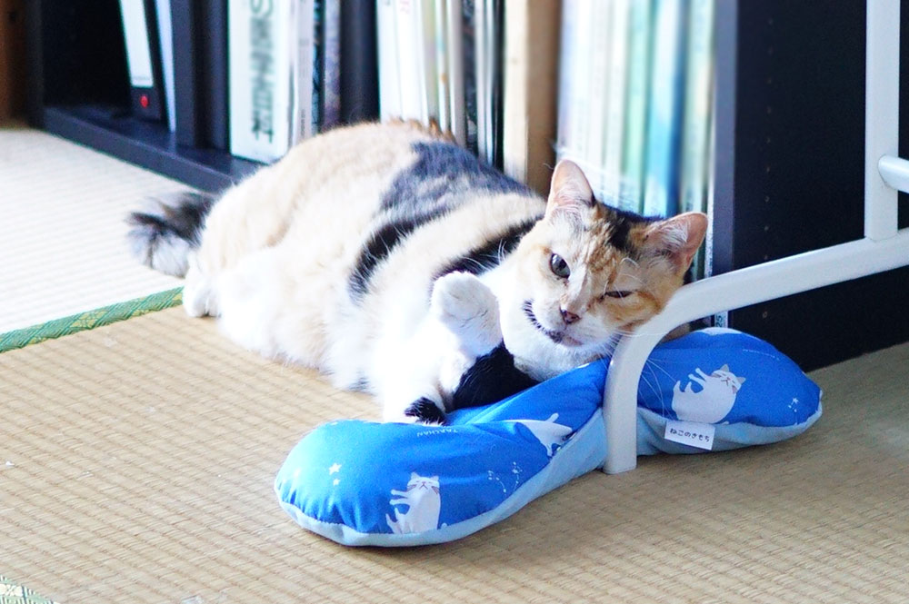 猫が過ごす部屋の暑さ対策について