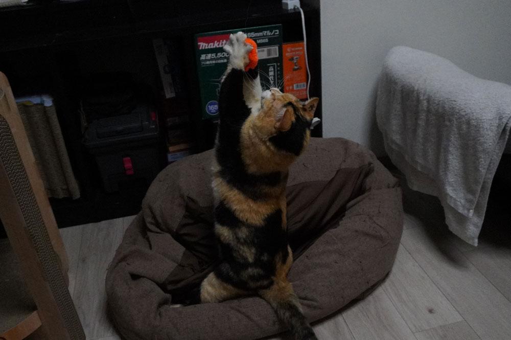 動く(ジャンプする)猫をブレずに撮る方法