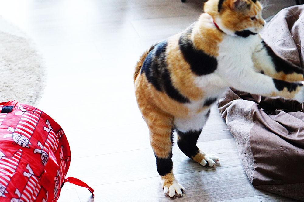 猫のおもしろい姿を撮る方法
