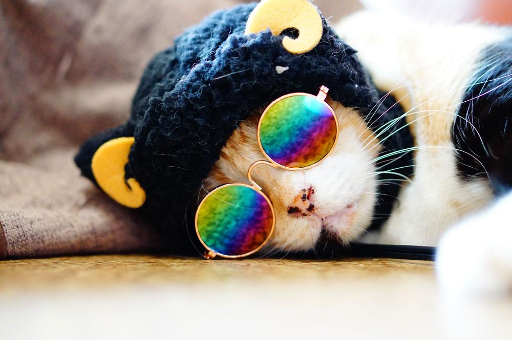 かわいい猫の姿を撮る方法