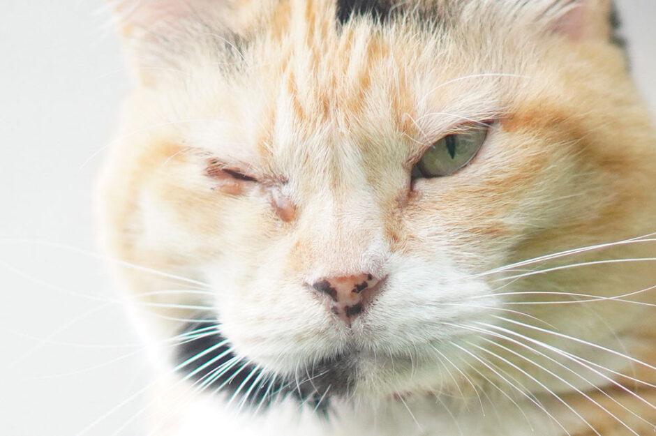 愛猫の片目だけ涙が出てショボショボしてるので動物病院に行ってきた。