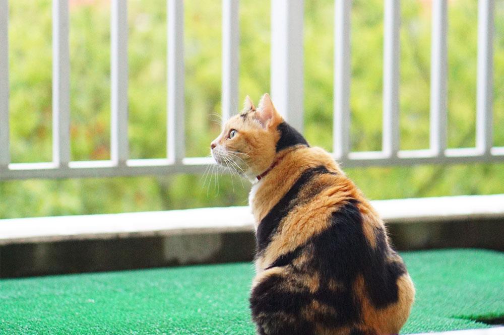 猫 片目 涙 予防