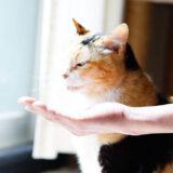 キャットフードの好き嫌いが激しい猫ちゃんに試したい5つの方法!